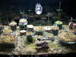 Terrarium with T5HO