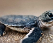 LED Lighting Installation Is Helping Save Baby Sea Turtles