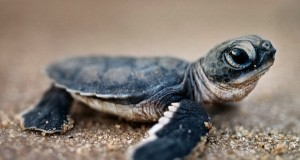LED Lighting Installation Is Helping Baby Sea Turtles
