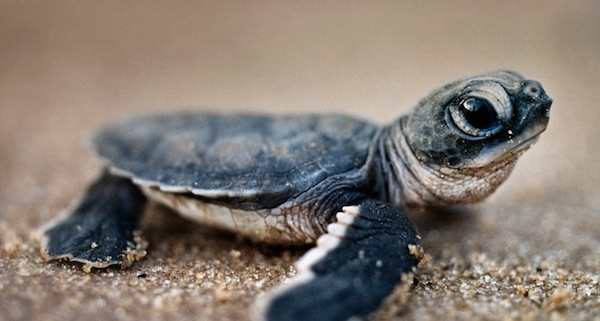 Funny 3d Animal Turtle Wallpapers Hd: LED Lighting Installation Is Helping Save Baby Sea Turtles